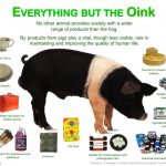 everything-but-the-oink